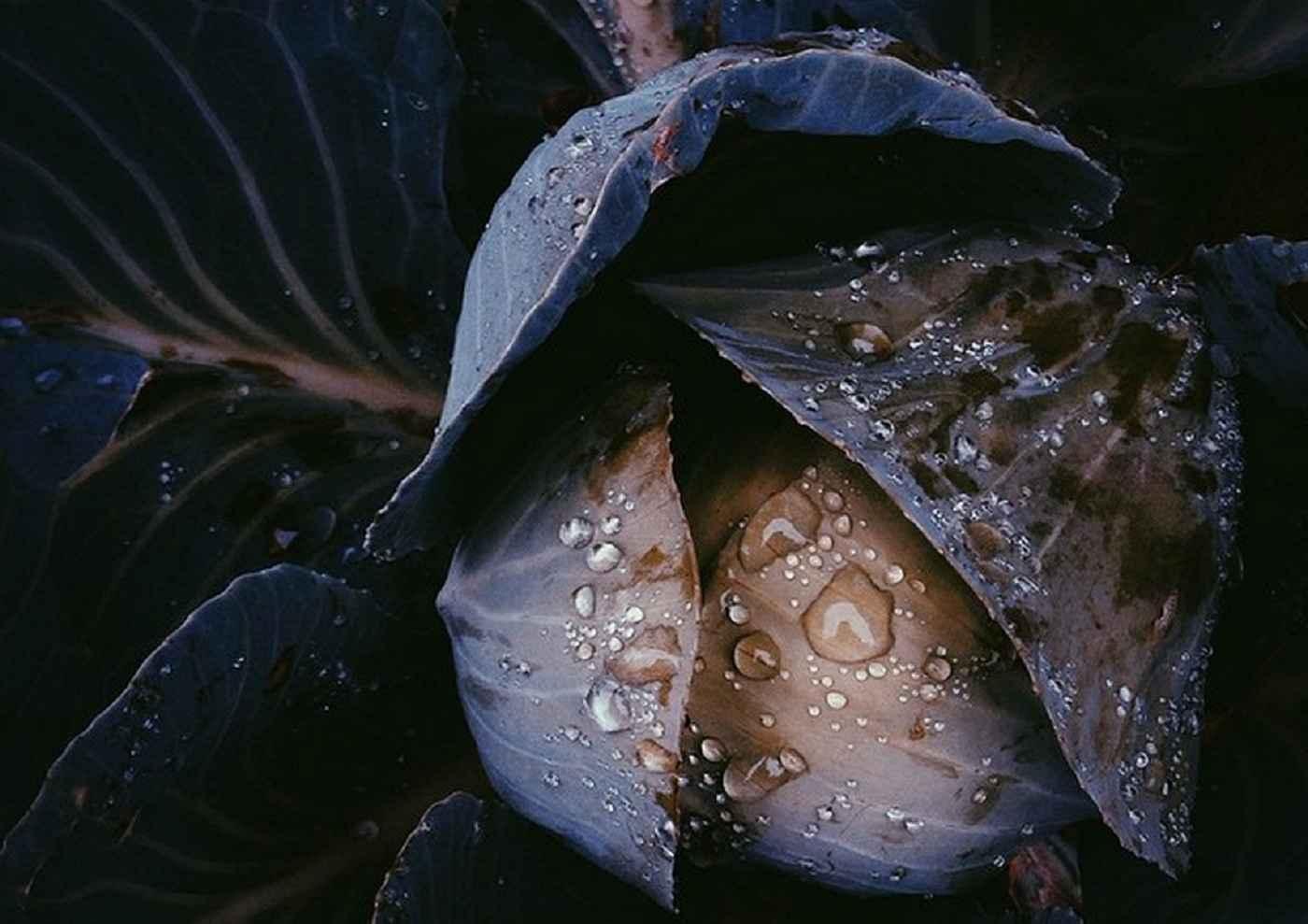 Ботаническое фото-искусство в темных тонах | Многоликий Инстаграм